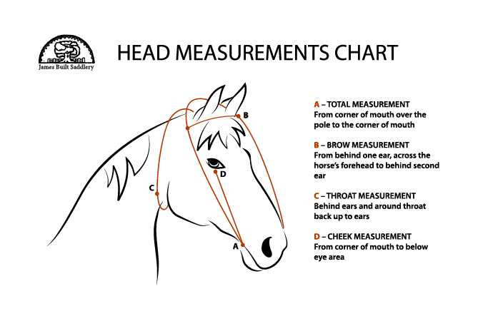 James Built Saddlery Horse head measurements chart