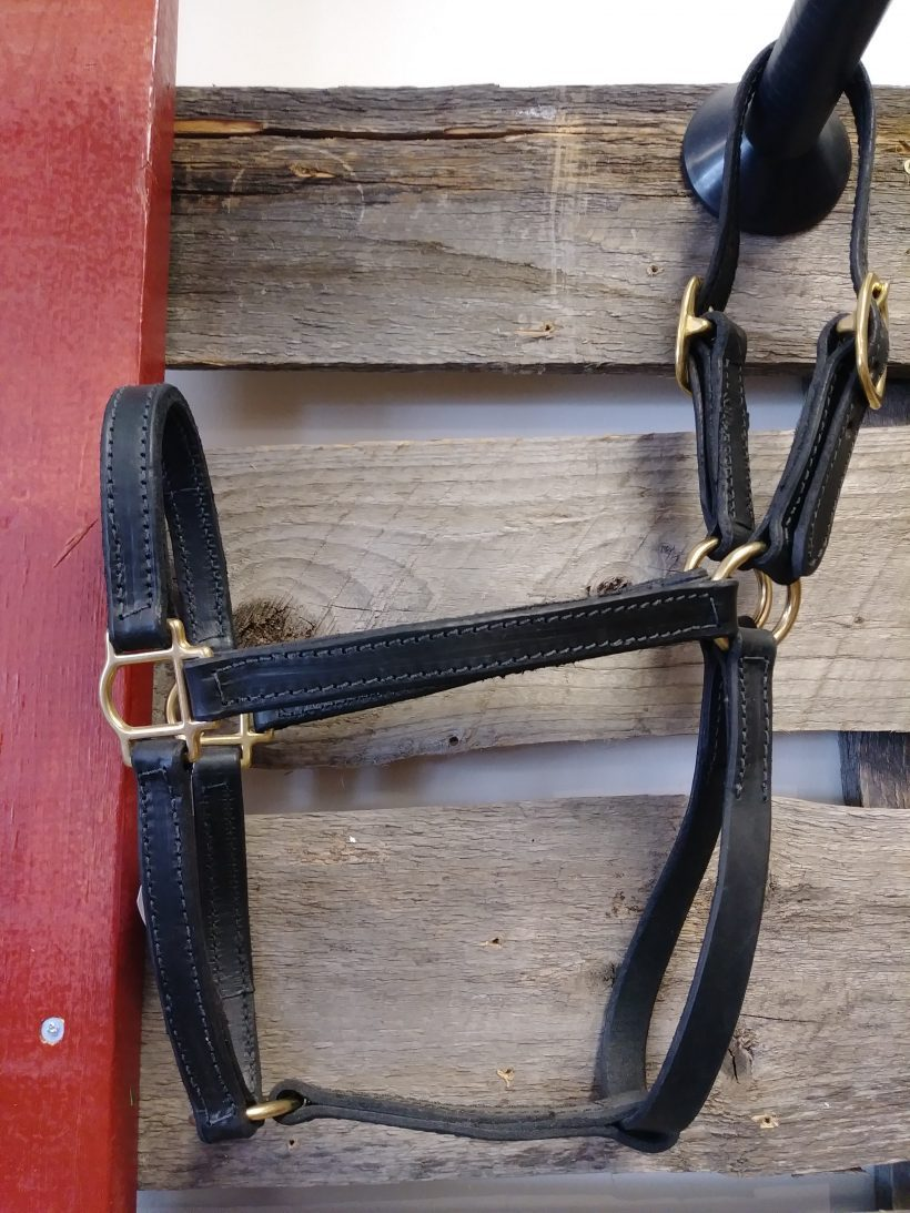 JBS english bridle halter Yearling Halter